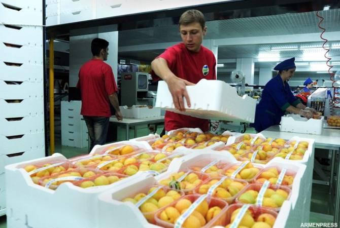 По словам министра сельского хозяйства Армении, в этом году экспорт абрикосов вырос на 78%