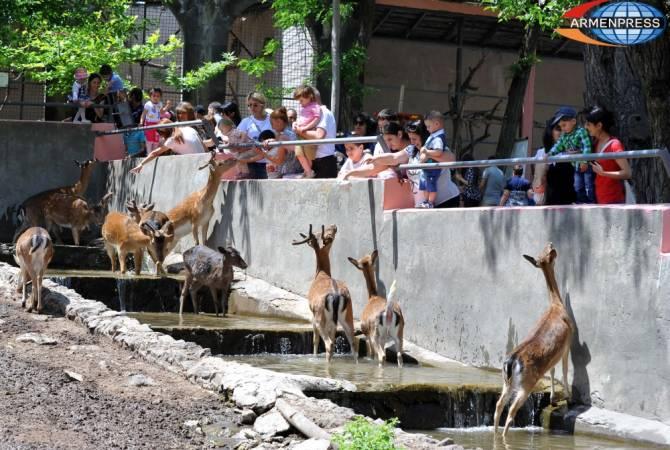 Ереванская мэрия проведет широкомасштабную проверку в зоологическом саду