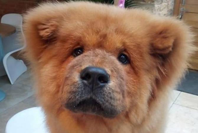 Bungle the chow-chow: Police-bite puppy released after thousands join petition