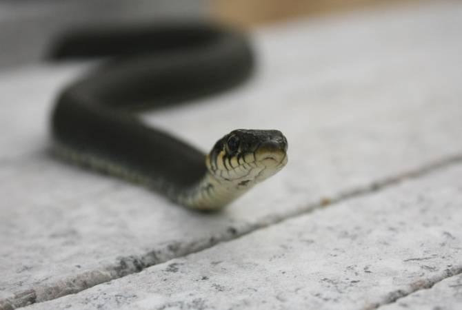 Спасатели перенесли змей в безопасное пункт