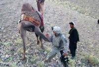 U.S. soldier kicked by camel in Afghanistan